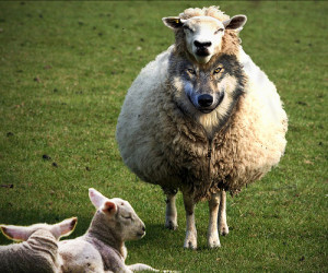 wolf-in-sheep clothing